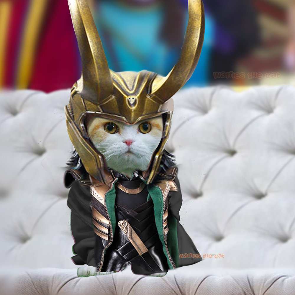 Waffles the Cat in Avengers Costumes — Waffles the Cat
